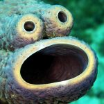 7 Craziest Sea Creatures You Probably Didn't Know Exist